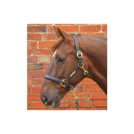 Hy Leather Head Collar